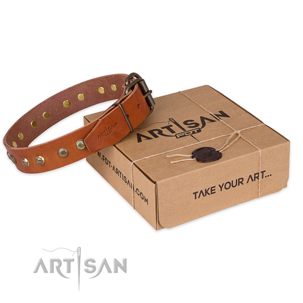 Finest quality full grain natural leather dog collar for stylish walking