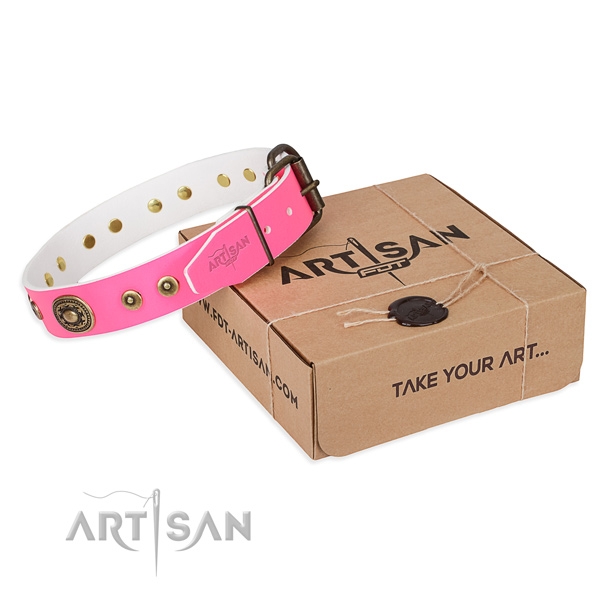 Fashionable leather dog collar for stylish walks