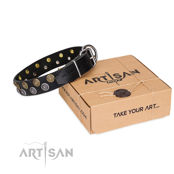Daily leather dog collar with fashionable studs