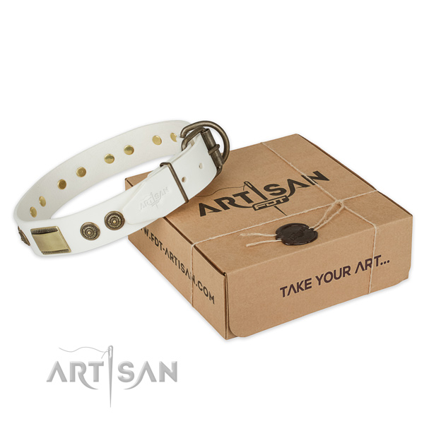 Fashionable full grain leather dog collar for everyday walking