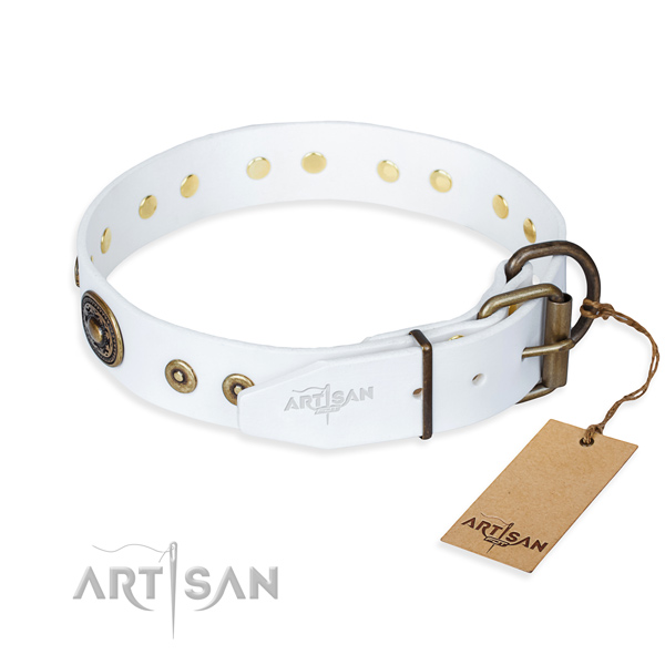Everyday leather collar for your gorgeous dog