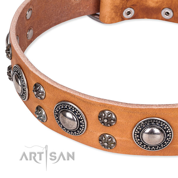Quick to fasten leather dog collar with resistant to tear and wear durable fittings