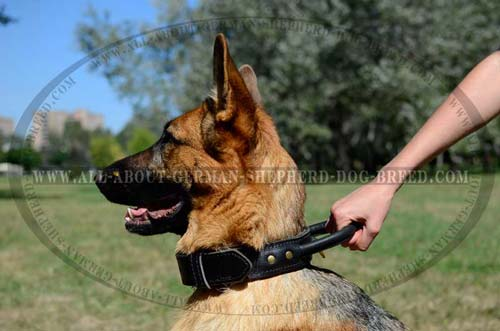 Agitation training leather collar for German Shepherd