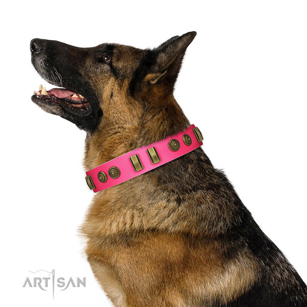 Fancy walking dog collar of leather with stunning embellishments