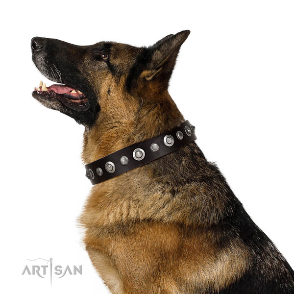 Fine quality genuine leather dog collar with impressive decorations