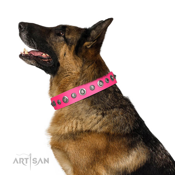 Leather collar with reliable traditional buckle for your handsome canine