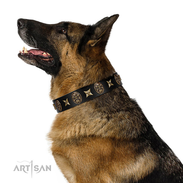 Everyday use dog collar of natural leather with designer embellishments