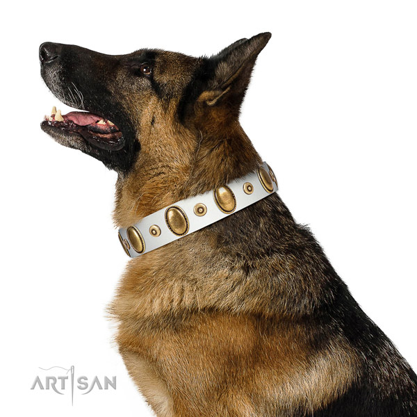 Rust-proof adornments on reliable natural leather dog collar