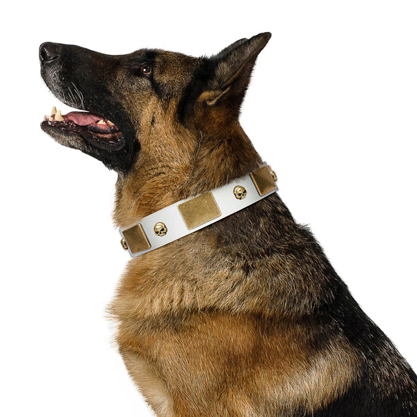 Quality leather dog collar made of genuine quality material