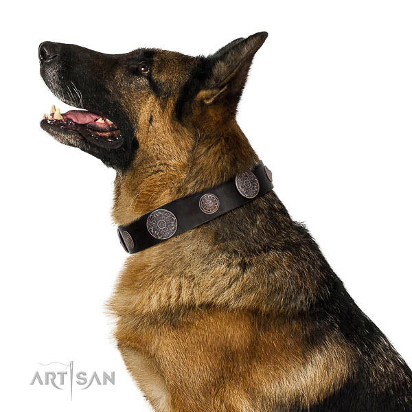 Leather dog collar with brass plated fittings for reliable dog control
