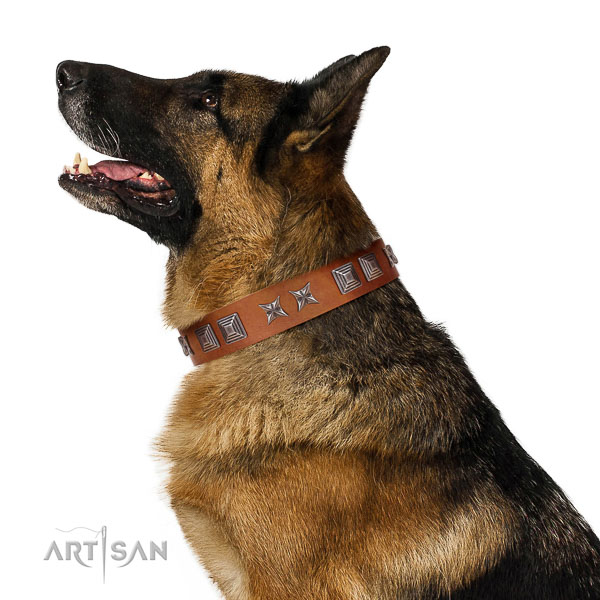 Natural leather dog collar with stylish adornments created pet