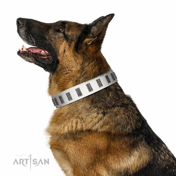 Corrosion proof hardware on full grain natural leather dog collar for stylish walking your pet