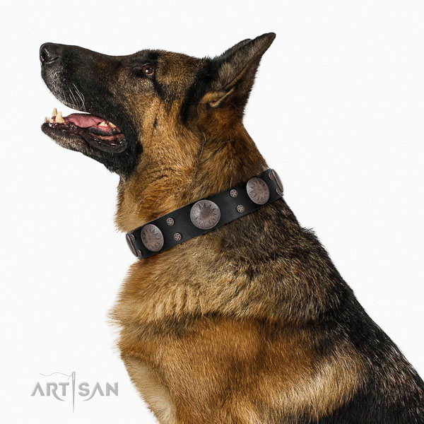 Full grain leather dog collar with fashionable adornments made canine