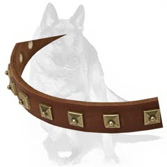 Beautiful accessory for your Dog