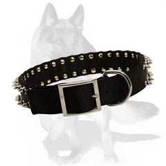 Srtong Dog Collar at an affordable price