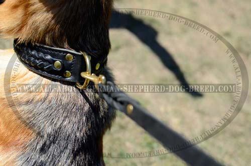 Extra Durable Collar for walks with your Shepherds
