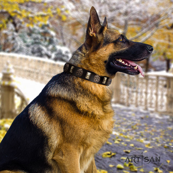 German Shepherd Dog full grain leather dog collar with embellishments for stylish walking