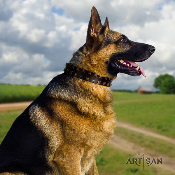 German Shepherd Dog full grain leather dog collar with adornments for stylish walking