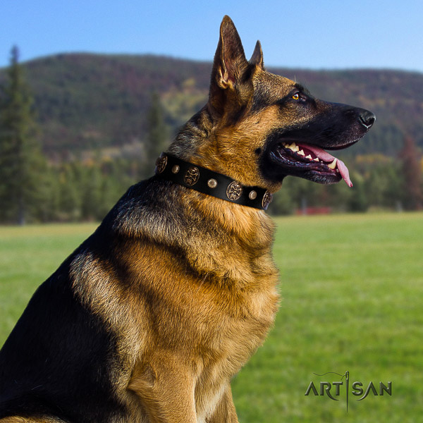 German Shepherd Dog full grain leather dog collar with embellishments for comfy wearing