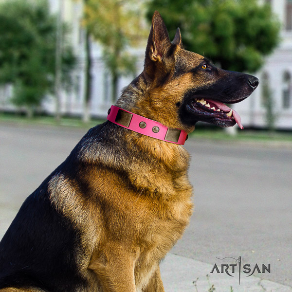 German Shepherd Dog full grain genuine leather dog collar with embellishments for daily walking