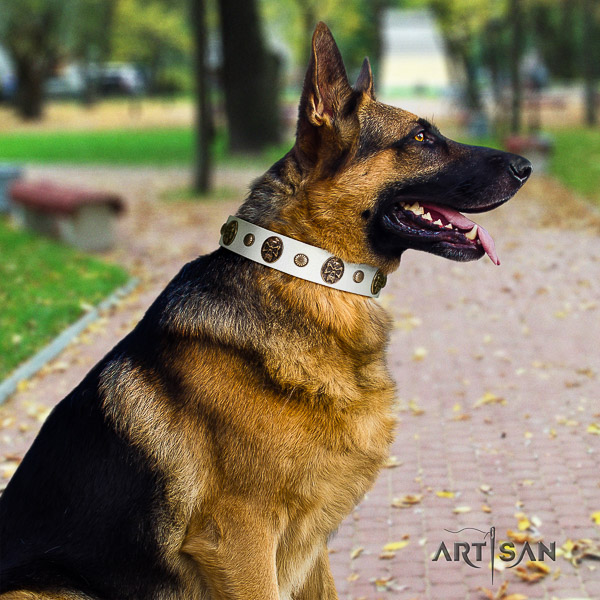 German Shepherd Dog full grain leather dog collar with embellishments for everyday walking