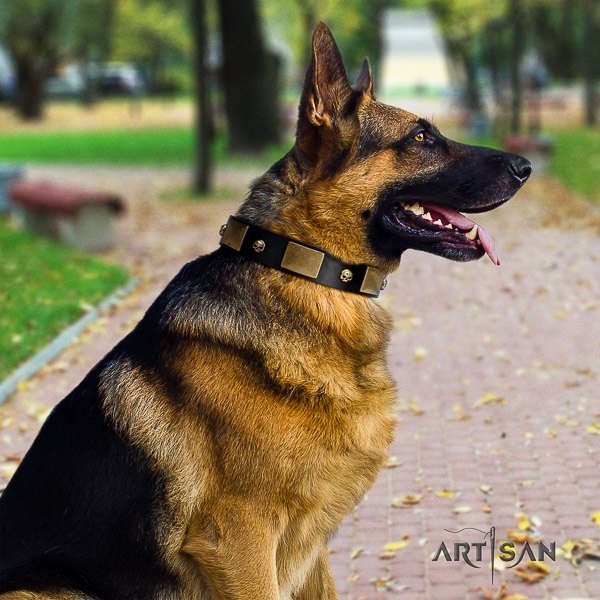 German Shepherd Dog full grain natural leather dog collar with adornments for stylish walking