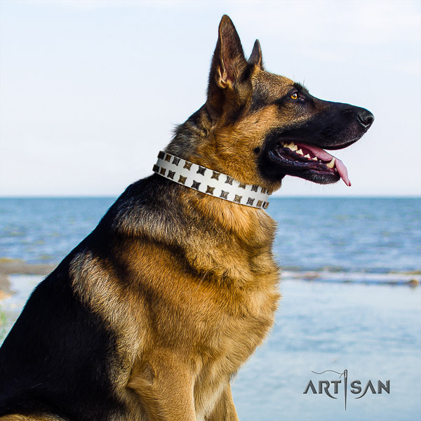 German Shepherd Dog leather dog collar with adornments for stylish walking