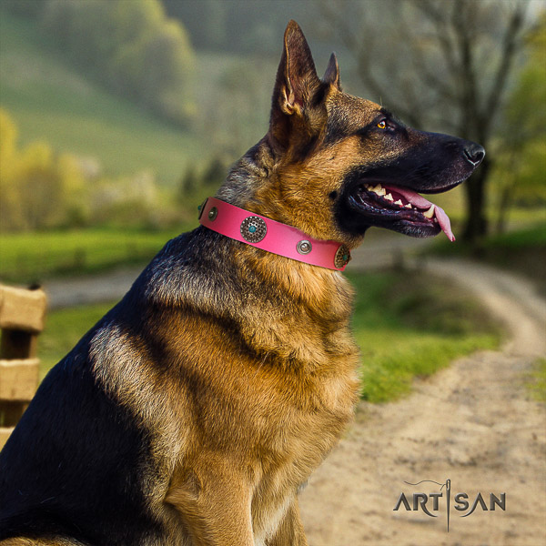 German Shepherd Dog incredible adorned full grain natural leather dog collar