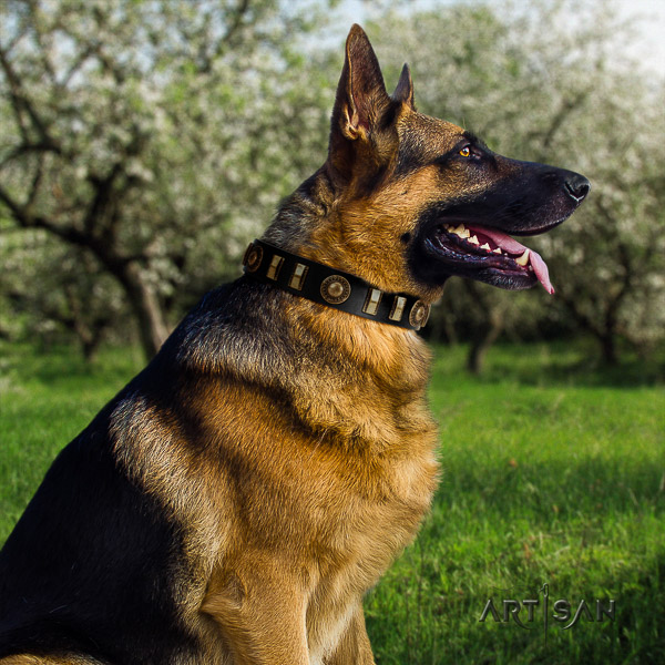German Shepherd Dog natural genuine leather dog collar with adornments for daily walking