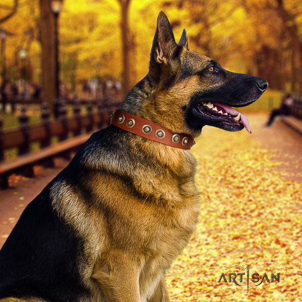 German Shepherd Dog full grain leather dog collar with studs for daily walking
