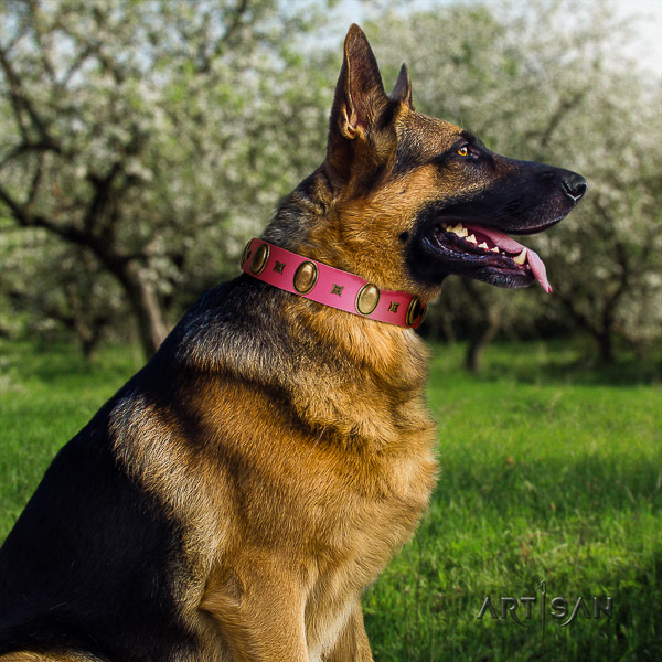 German Shepherd Dog exceptional decorated full grain genuine leather dog collar