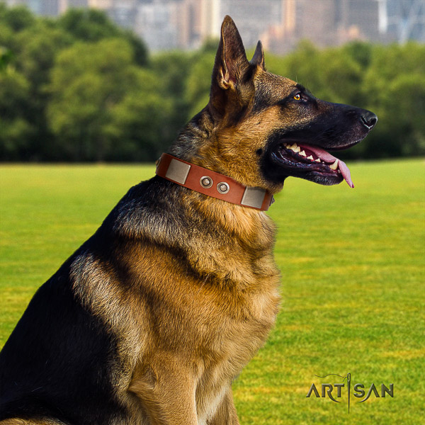German Shepherd Dog leather dog collar with embellishments for everyday walking