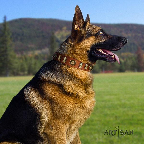 German Shepherd Dog full grain natural leather dog collar with adornments for comfortable wearing
