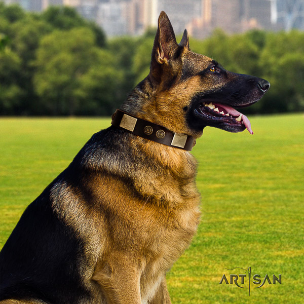 German Shepherd Dog full grain natural leather dog collar with adornments for everyday use