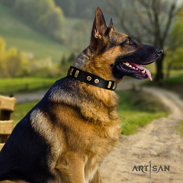 German Shepherd Dog natural genuine leather dog collar with studs for walking