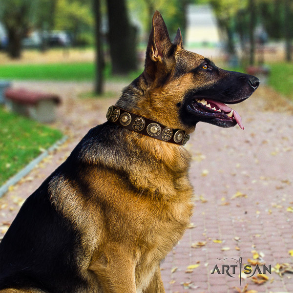 German Shepherd Dog full grain natural leather dog collar with adornments for handy use