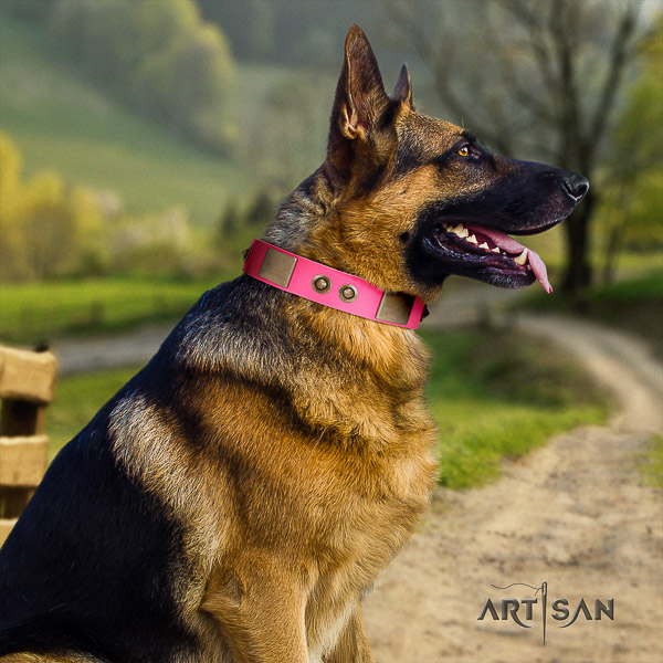 German Shepherd Dog leather dog collar with embellishments for handy use