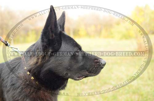 Durable Collar for training your Shepherds