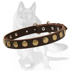 Special Design German Shepherd Collar