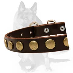 Secure fit Collar with steel buckle