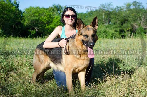 German Shepherd supple leather collar for walking