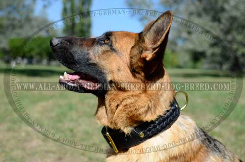 Utmost Comfort Dog Collar for training