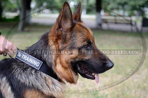Strong Dog Collar for training