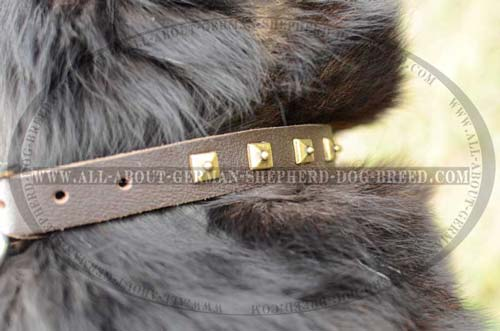 Comfort Dog Collar for everyday use