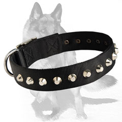 Dog Collar with stylish nickel-plated studs