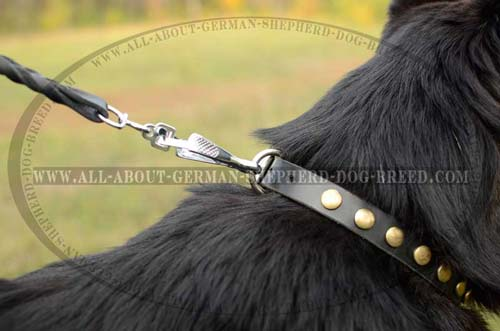 Exclusive Collar for walk and training