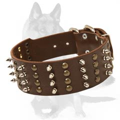 Gorgeous Collar with Studs