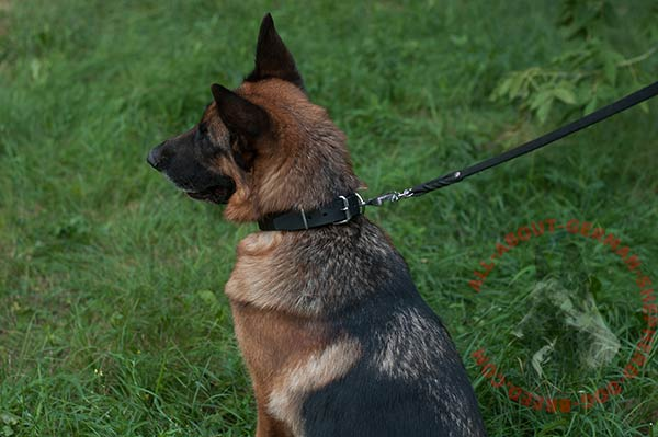 Classical German Shepherd collar for efficient training