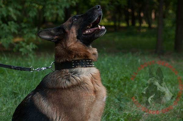 Embellished leather German Shepherd collar
