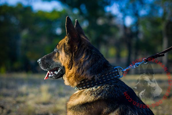 Matchless leather German Shepherd collar